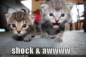 shock and awwwww